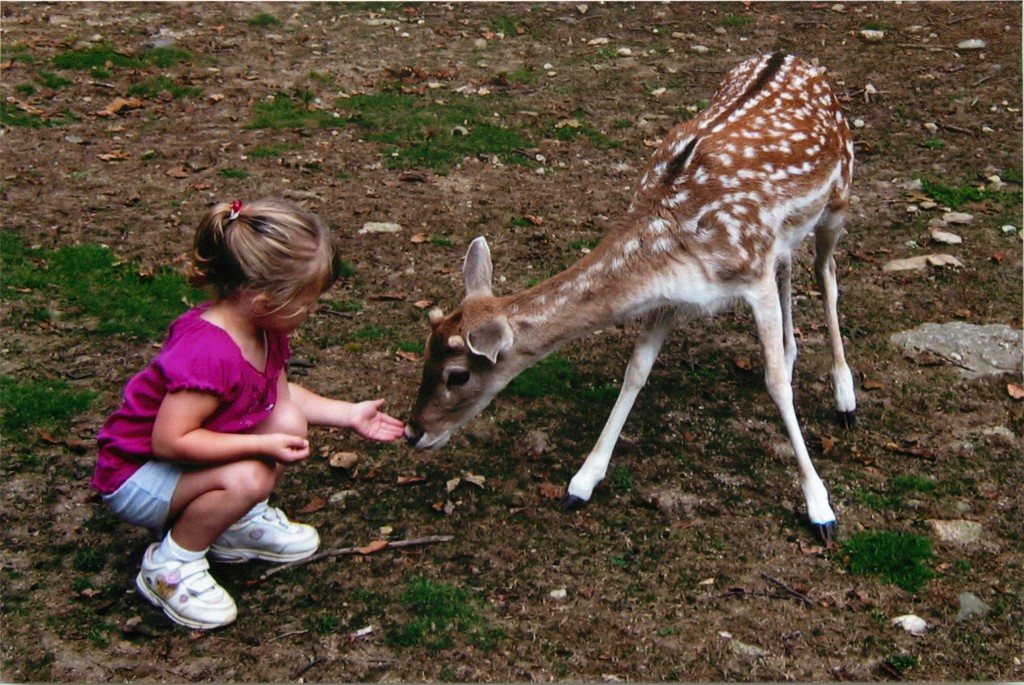 Syd and deer