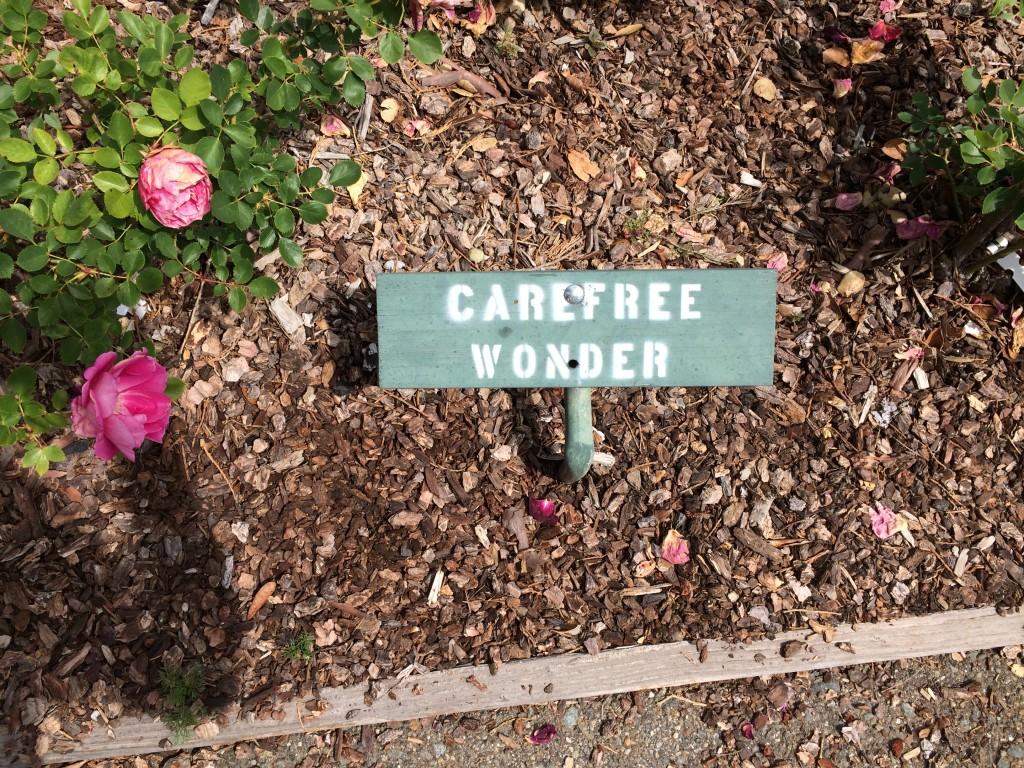 carefree wonder