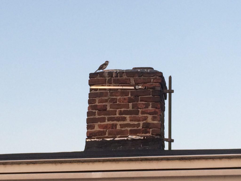 bird on chimney